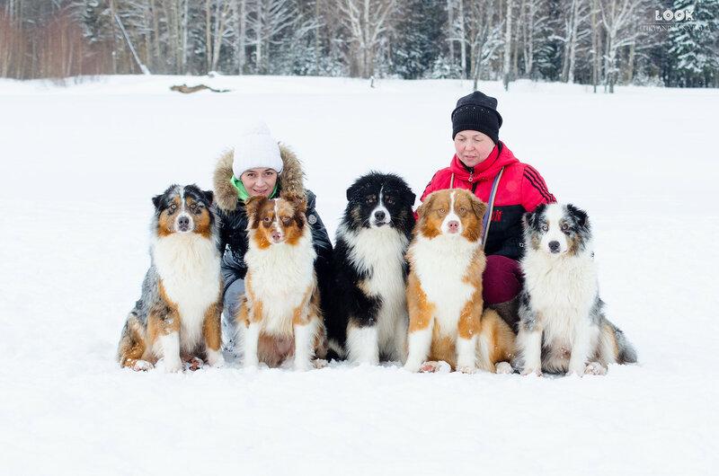 Мои собаки: Зена и Шива и их друзья весты - Страница 6 0_a774f_76bfc2b7_XL
