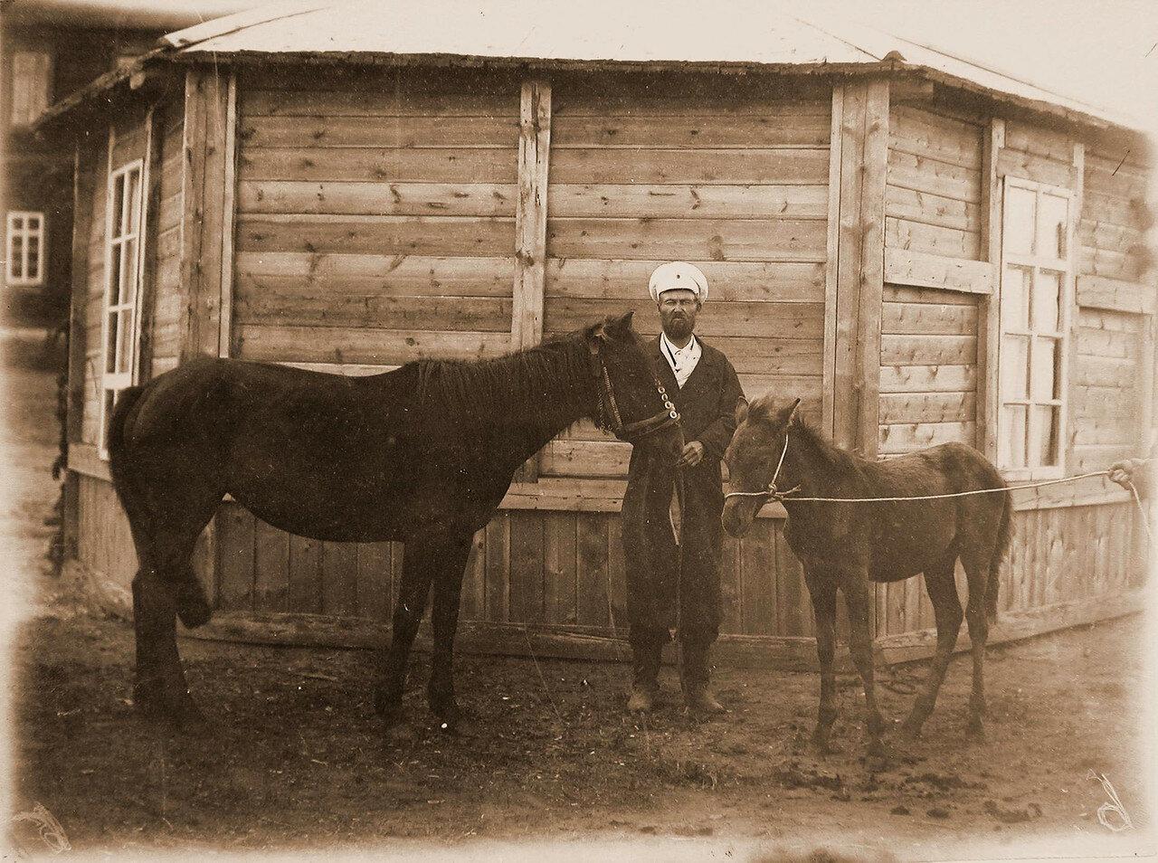 33. Кобылица рыжая (8 лет) казака Богданова ( похвальный отзыв)