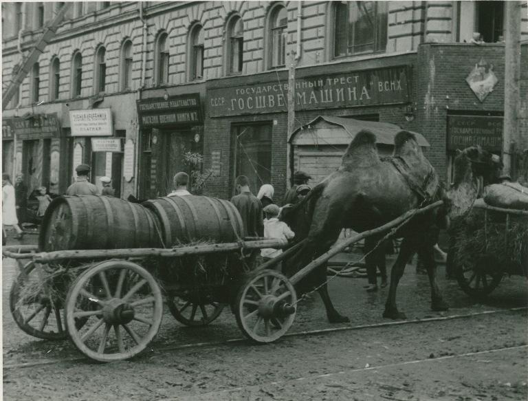 Working camels in Kazan', 1930.jpg