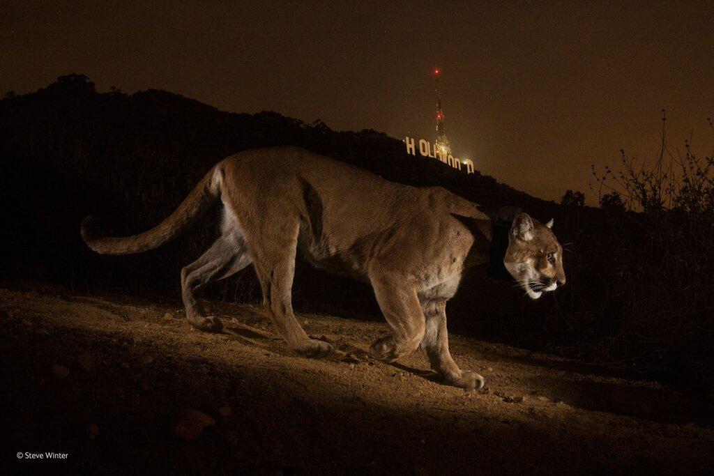 2014, Wildlife Photographers of the Year.jpg