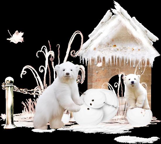 Белые медведи на прозрачном фоне