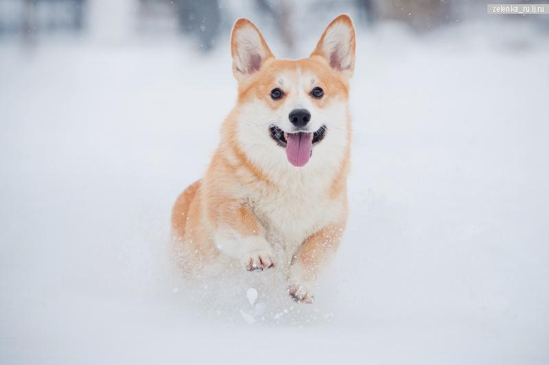 пофотографирую Ваших собак! - Страница 5 0_1677d6_7fd412ca_orig