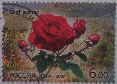 2007 Флора. РФ - КНДР. роза 6