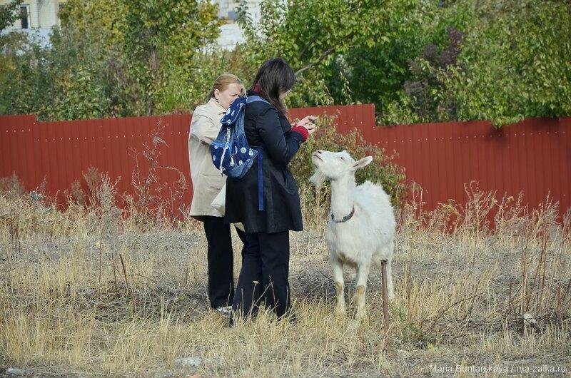 Козлы, поселок Рейник, 18 октября 2015 года