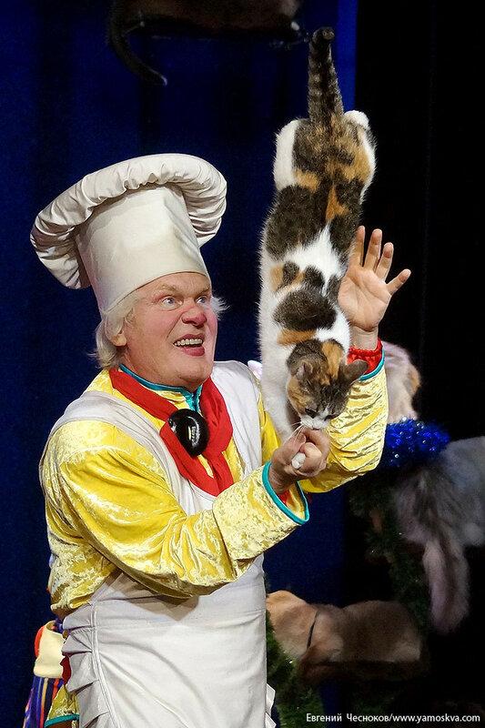 Осень. Театр кошек. ДИНАСТИЯ. 15.10.15.45..jpg