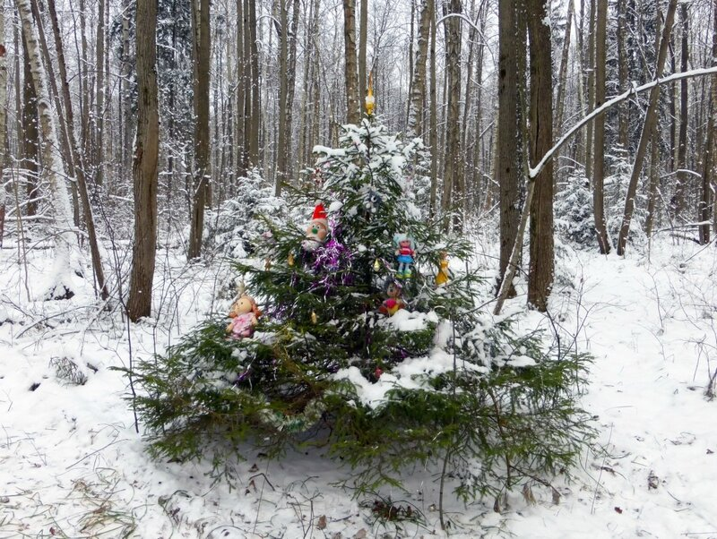 Ёлка до снегопада