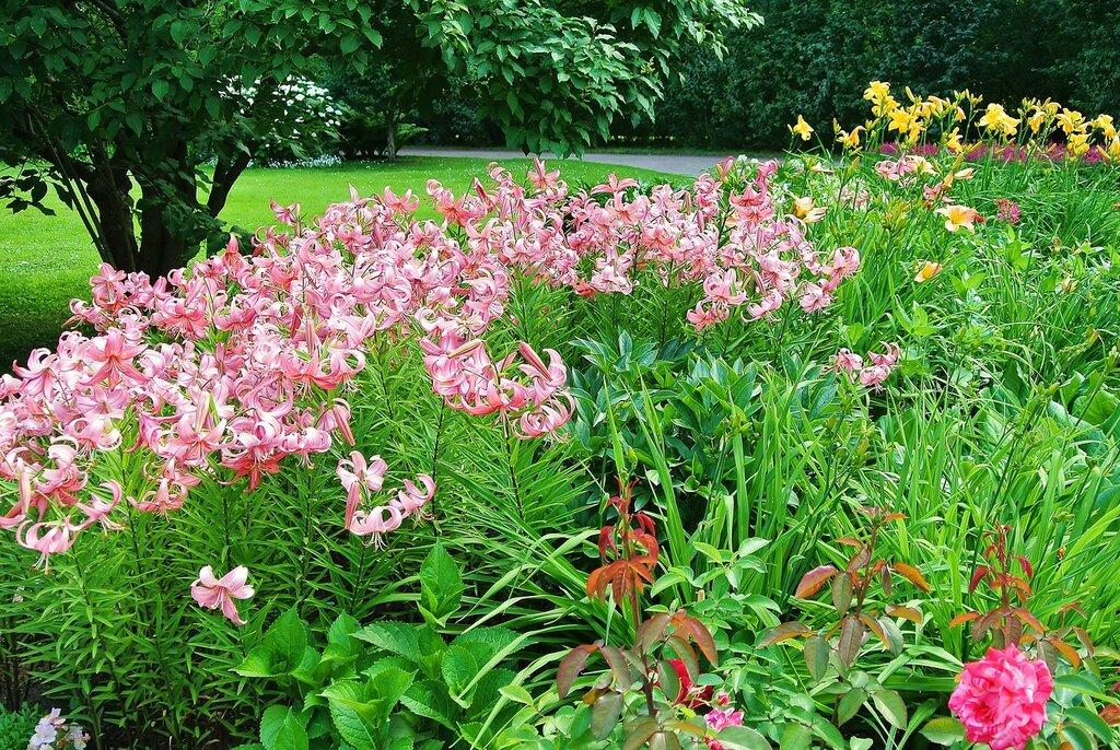 Цветы Собственного садика в июле 2013г.