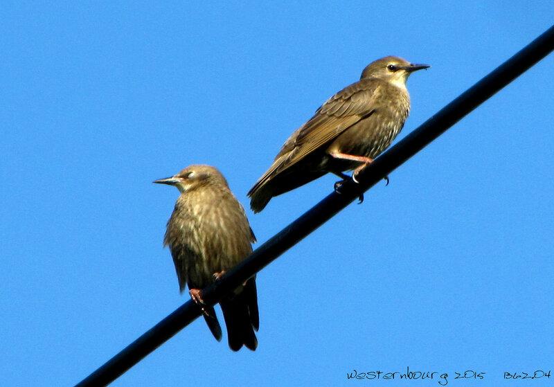 1362.04 Птицы в Ратьково