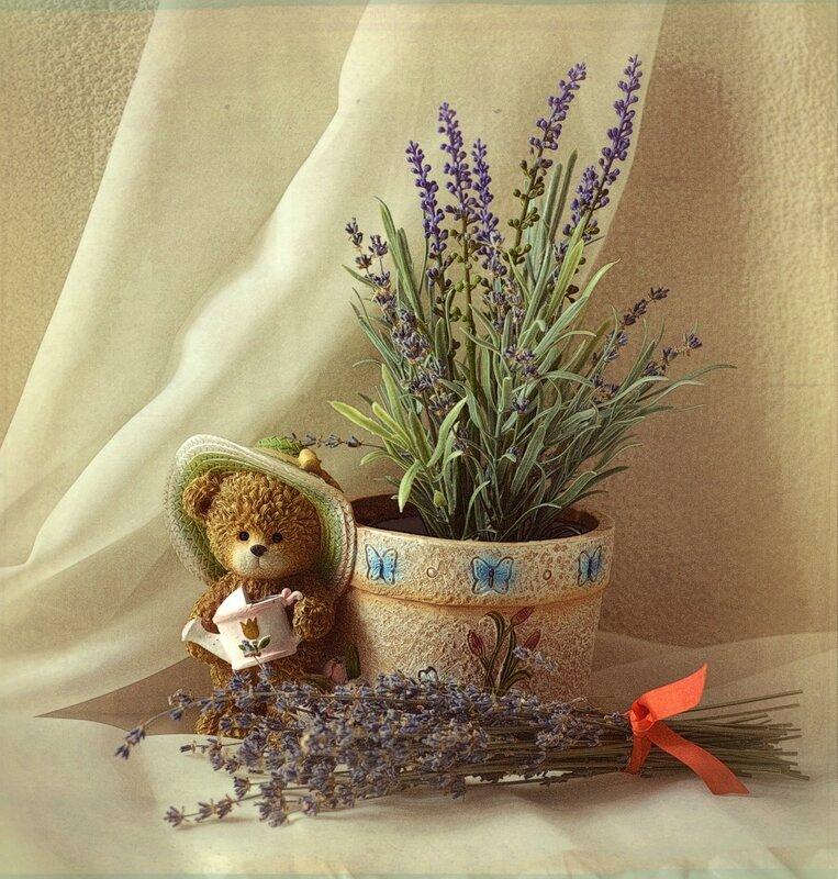 лаванда-запах счастья