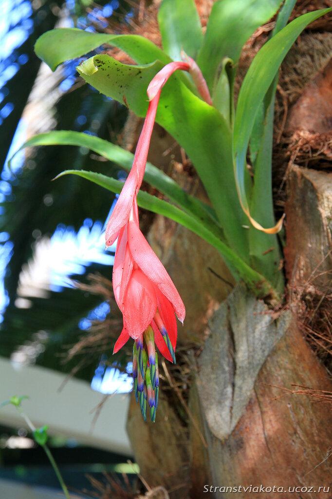 Jardin de orquideas в Пуэрто Крус