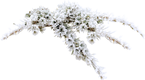 mzimm_snowflurries_firbranch.png
