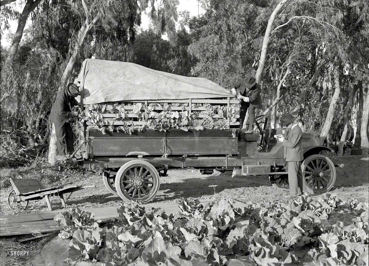 Специализированные транспортные средства начала 20-го века на снимках американских фотографов (21)