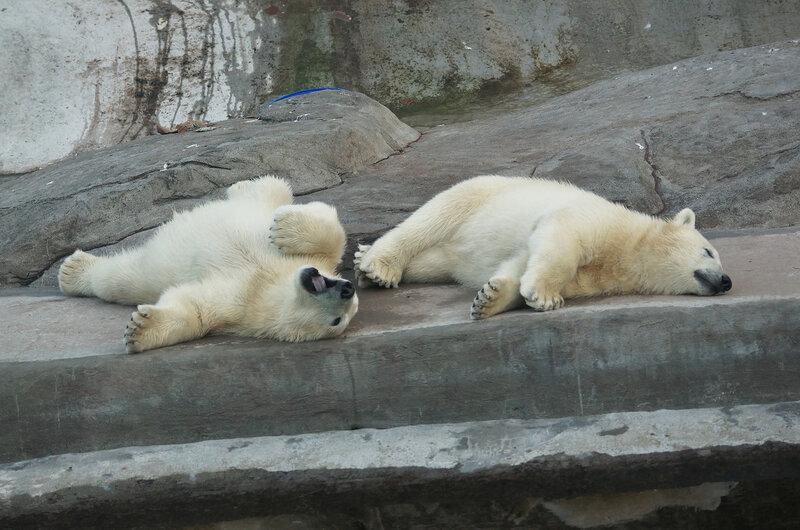 белые медвежата4.jpg