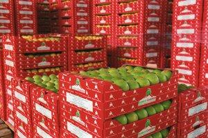 Россия сняла эмбарго на поставку фруктов для Молдовы