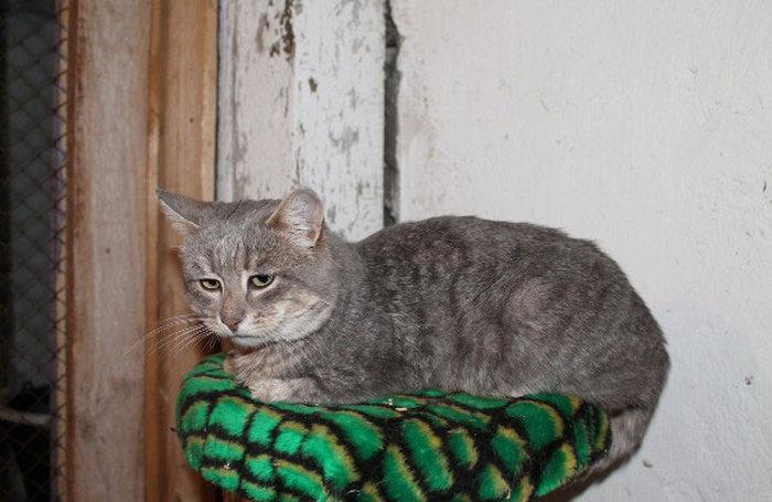 кот с грустной мордой