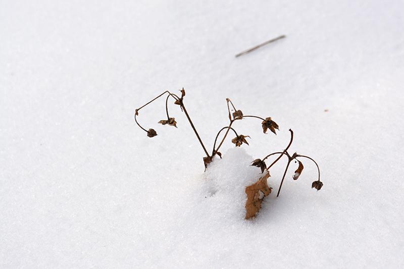 зимний лес 5