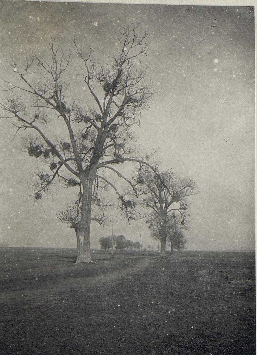 Жидычин. Дерево в окрестности села