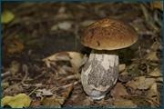 http://img-fotki.yandex.ru/get/15528/15842935.161/0_d2513_8cf3e500_orig.jpg