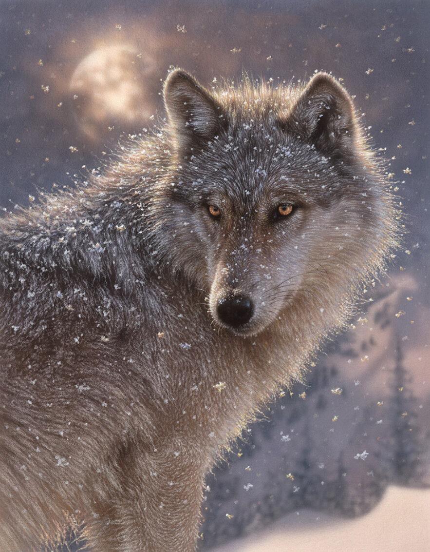 Картинки волки, для
