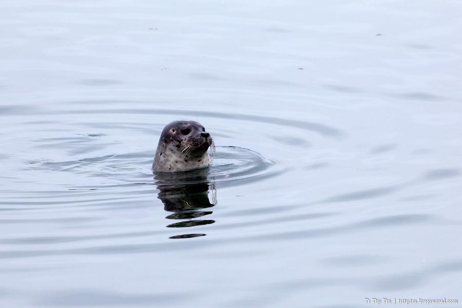 24. Дороги Нордюрланда и киты залива Скъяльфанди.