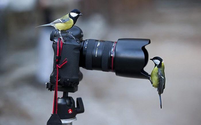 Сейчас отсюда вылетит птичка