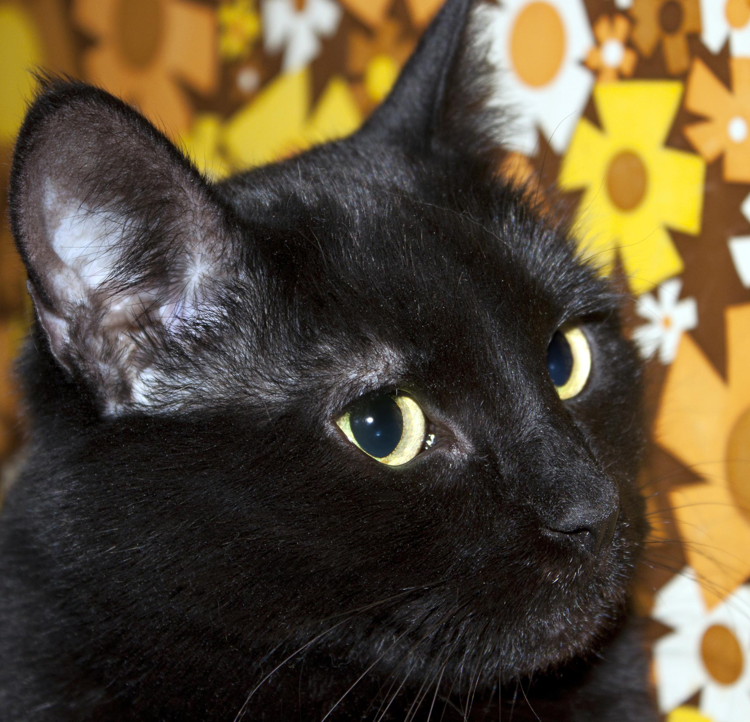 Ночка — ИДЕАЛЬНАЯ кошка