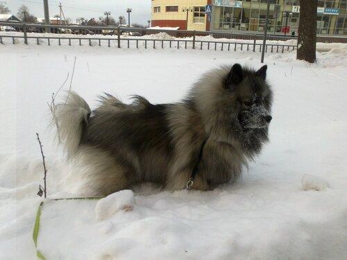 https://img-fotki.yandex.ru/get/15528/37228632.c/0_91567_a0f452a8_L.jpg