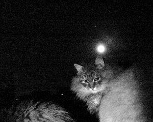 Луна и Юпитер