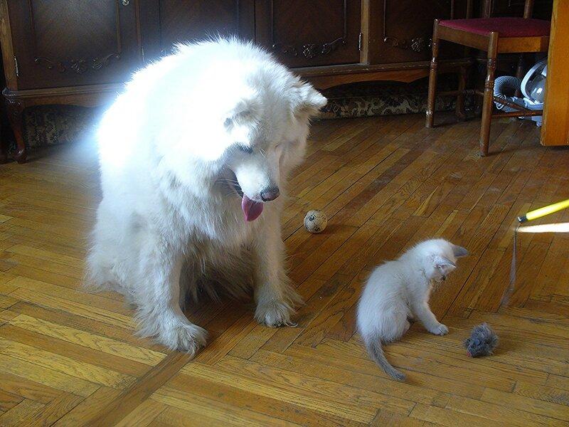 Атос, это мышка!