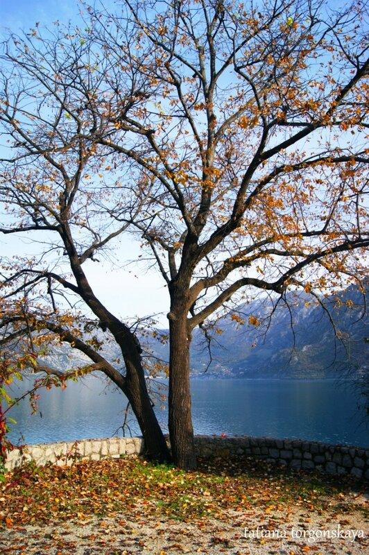 Дерево возле моря