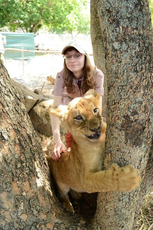 Львенок играет в парке Касела, Маврикий