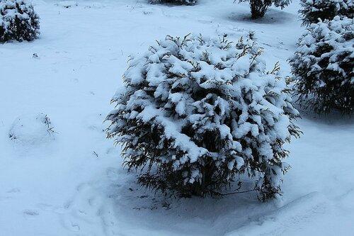 28-12-2014 Советск. Зима