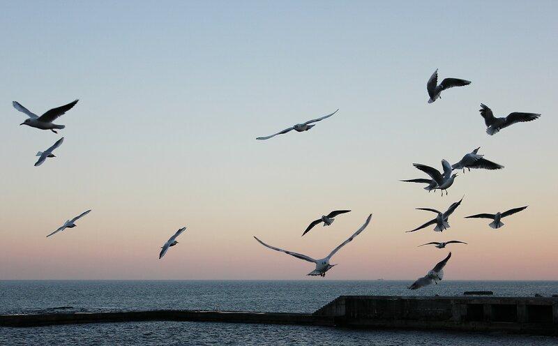 чайки и море фото