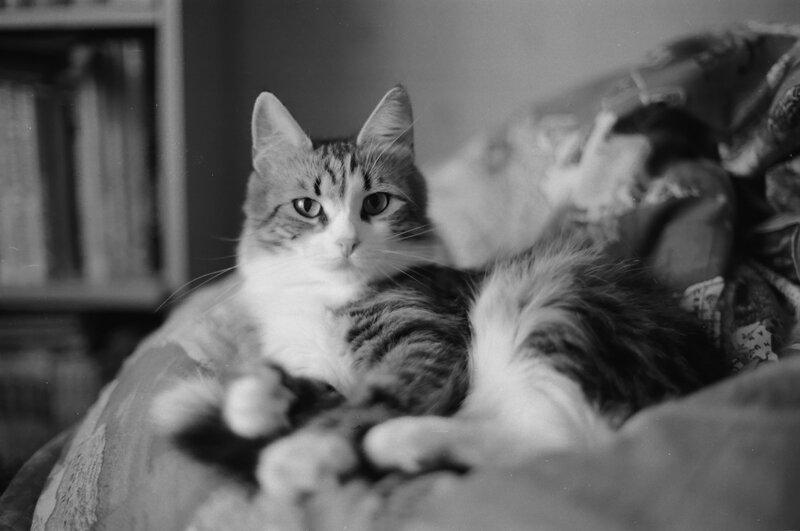 Кошка и все что с ней связано
