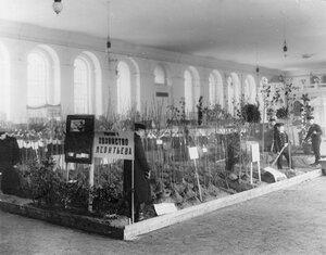Экспонаты опытного частного хозяйства Леонтьева. 1911 г.
