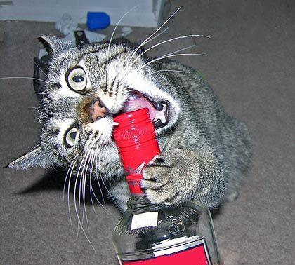 Коты жрут