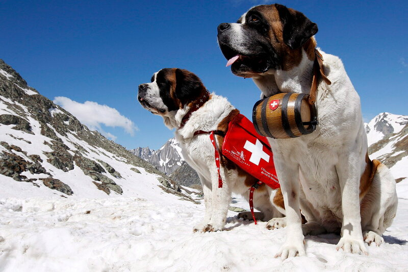 Swiss St. Bernard Club?s 125th anniversary