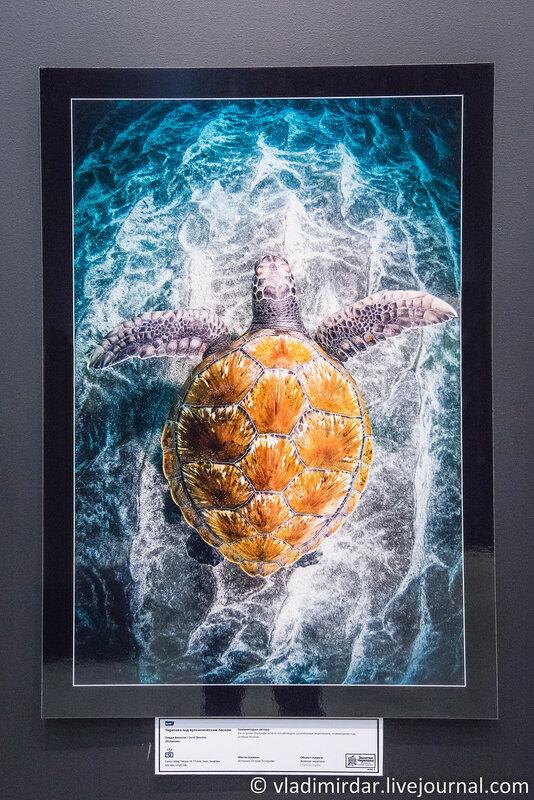 Черепаха над вулканическим песком. Харди Бенитес. Испания.