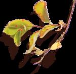ldavi-drifting-leaftwig5.png