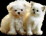 собака и кошка.png