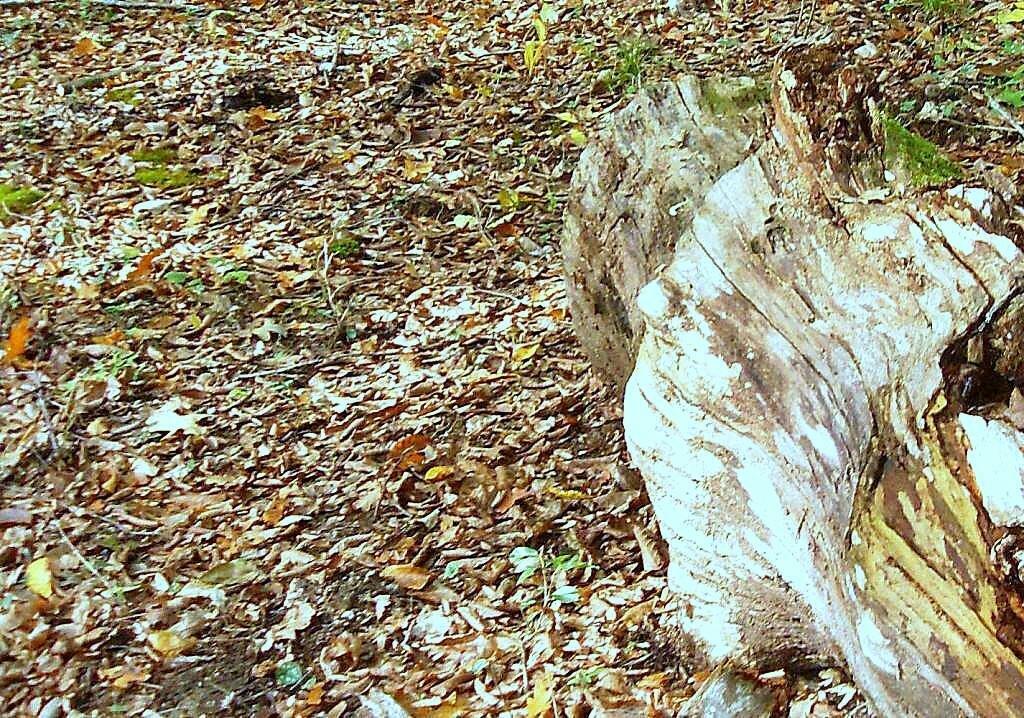 В лесу, под Горячим Ключом, (154).JPG