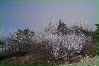 http://img-fotki.yandex.ru/get/15531/15842935.4d/0_c63f6_169f2ecd_orig.jpg