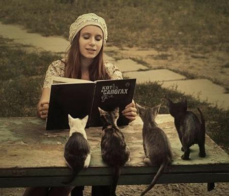 Приколы про котят и сказку
