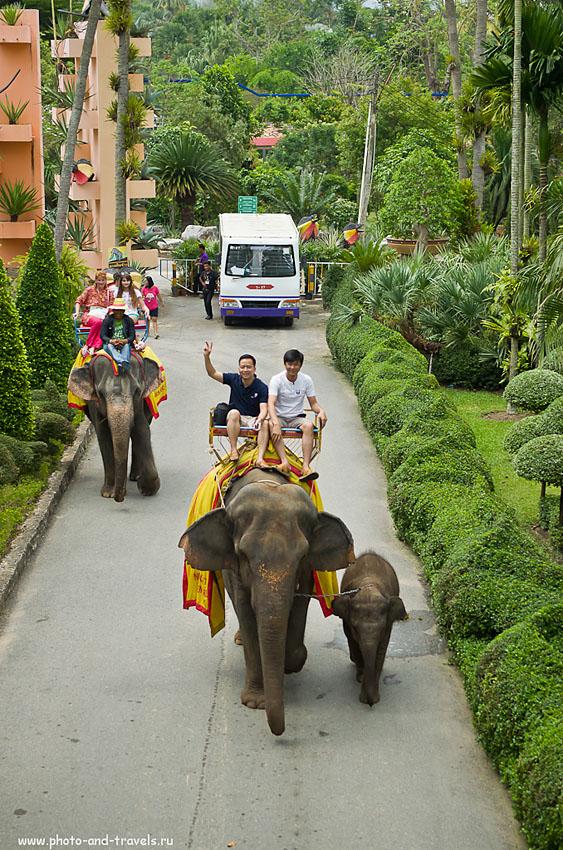 11. Катание на слонах в парке Nongnooch