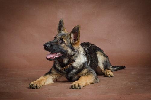 Родились щенки от Charly v. Rio Negro и Lola iz Peschanki - Страница 3 0_f4a15_25139e76_L