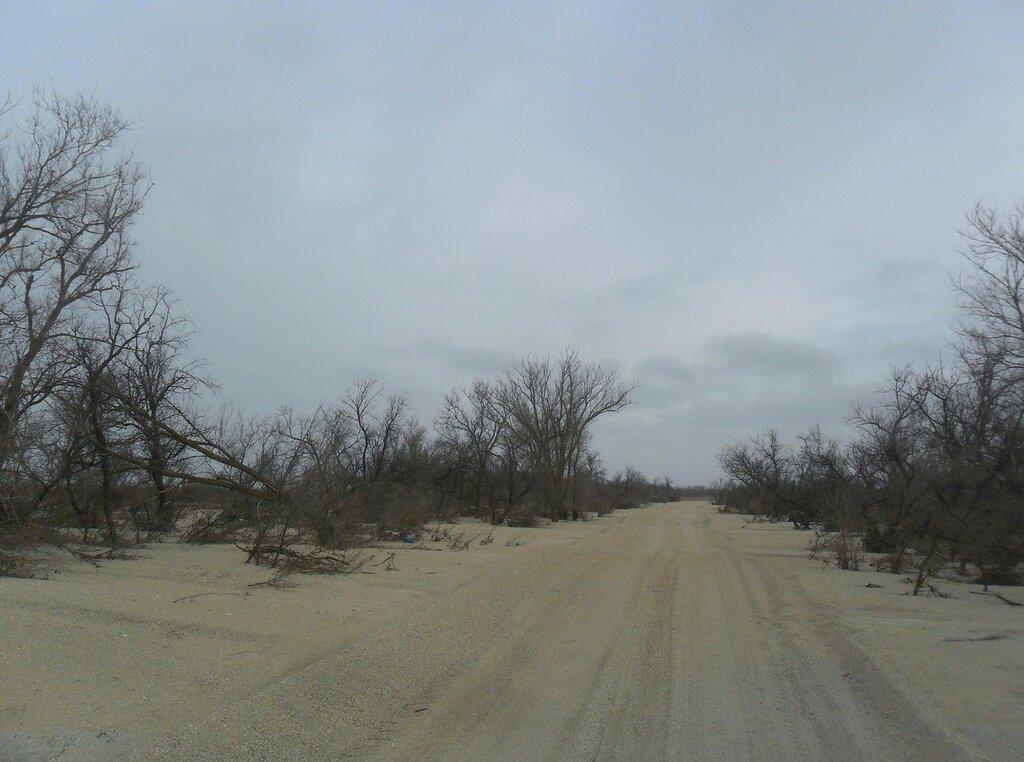 Пасмурно, дорога пустынная ... SAM_5577.JPG