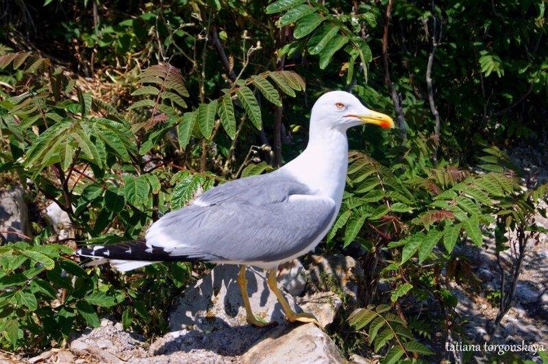 Чайка на острове