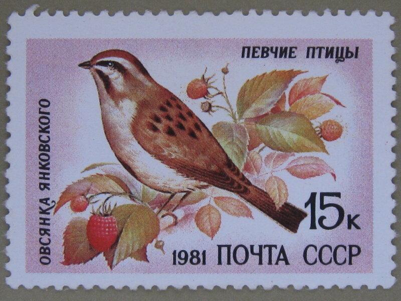 Овсянка Янковского (Emberiza jankowskii).