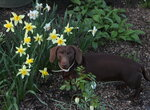 Собаки в саду 2015