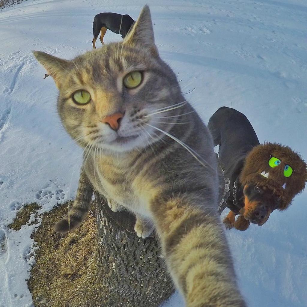 кот который делает селфи